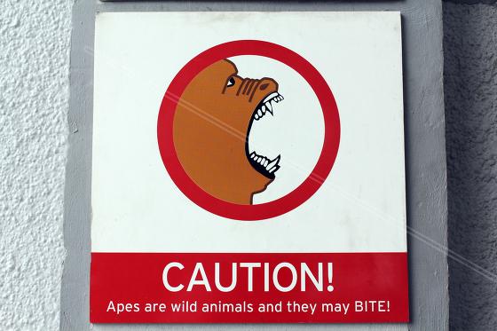 Apes bite