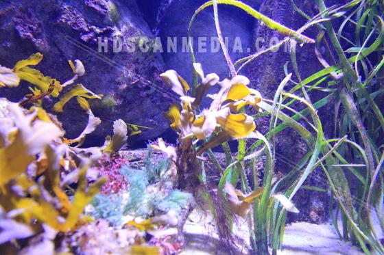 Sjöväxter