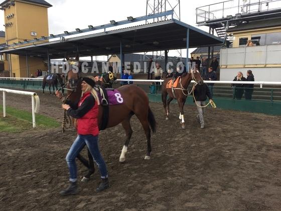 Horse Racing Horses
