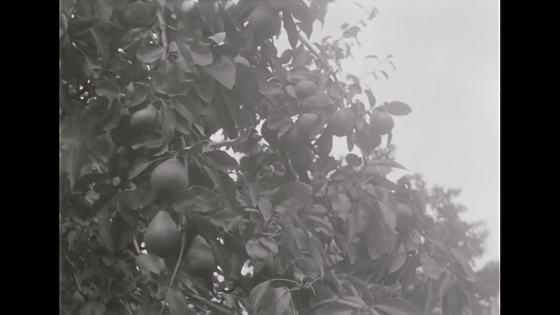 Pojke plockar äpplen