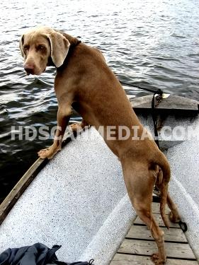 Hund i båt