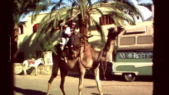 Kamel ridning