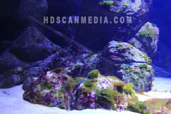 Havsbotten alger