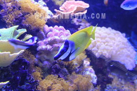 Fiskar bland koraller