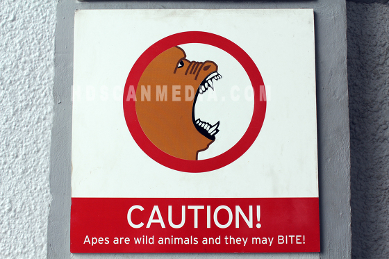 Caution Apes bite
