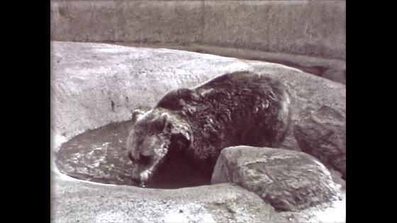 Bears, Malmö Folkets Park
